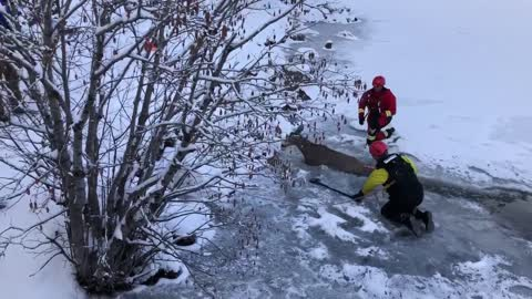 Fire department crew rescues deer from frozen lake