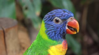 beautiful parrot song