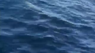 Dolphins swimming along a boat