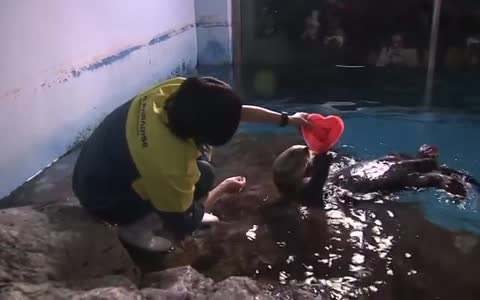 Sea otters receive their Valentine's Day hearts