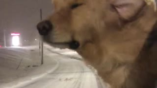 Cute Pooch Likes the Winter Weather