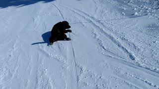 Labrador hilariously sleds down ski slope - Video