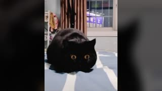 Funny black cat with big eyes.