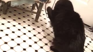 Black cat playing with string from laundry  - Video