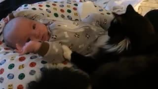 Cat preciously cuddles with tiny baby