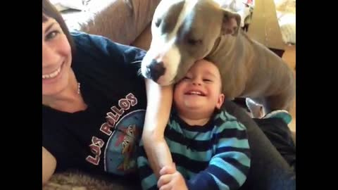 Pit Bull makes ticklish baby laugh