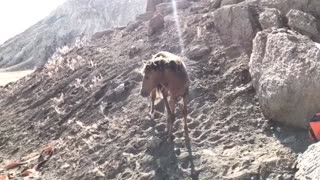 Rescuing Horse Stuck Between Rocks - Video