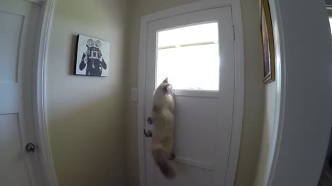 Genius Cat Has Figured Out The Best Possible Way To Look Outside