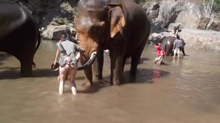 Elephlying in Thailand - Video