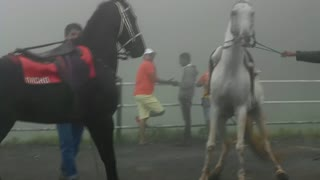When two Horses argue with each other  - Video