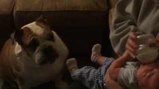 Caring Bulldog kisses crying baby - Video
