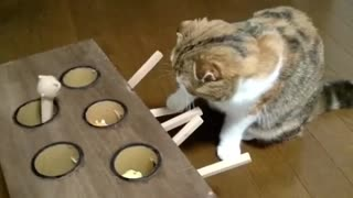 My cat learned to play with me this funny game & crazy movements from my cat - Video