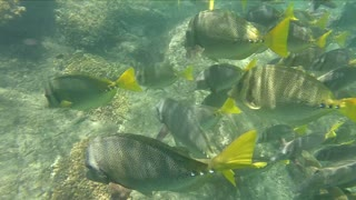 Fish Feeding Frenzy in Cabo San Lucas  - Video