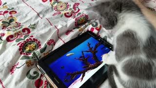 Kitten tries to scoop out fish from tablet - Video