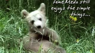 Bear Cub Lives With Family - Video