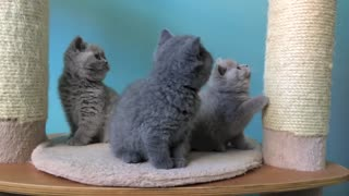 These Amazing Kittens Will Conquer Your Heart With Their Cuteness! - Video