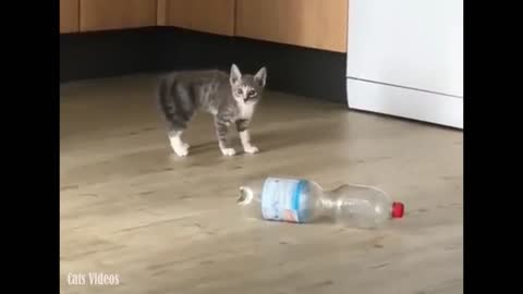 A cat plays in the kitchen with a glass of plastic