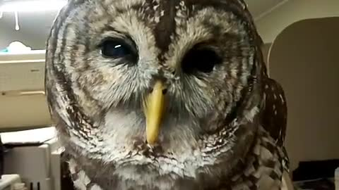 look at this cool OWL from birds store