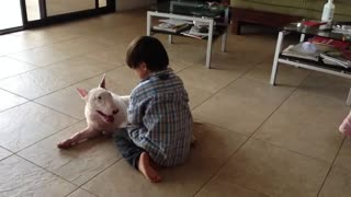 Incredibly Patient Bull Terrier Entertains Energetic Kid