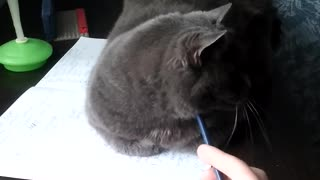 cat liked the pencil!