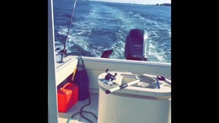 Beautiful Sea Lion Swims with Boat