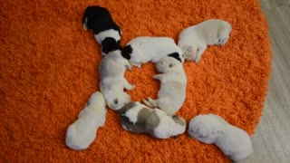 Cute Circle of Snoozing Puppies
