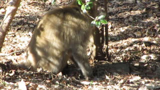 What is the monkey looking for? - Video