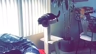 Guy throws hat at cat and cat catches hat in paw - Video