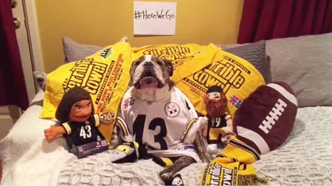 Bulldog impatiently awaits 2017 NFL season
