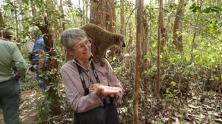 Feeding a Brown Lemur on Lemur Island in Madagascar - Video