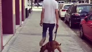 Puppy walks through mans legs