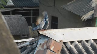 Two Bizarre Funny Bird Fighting With Each Other