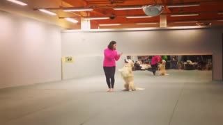 Dog dancing  - Video