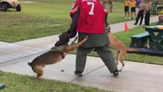 Navy SEALs investigating video of 'Kaepernick stand-in' attacked by dogs for kneeling during anthem