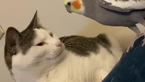 Talking parrot calls his cat buddy by name