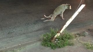 Stray Dog Stunt (wait for it) - Video