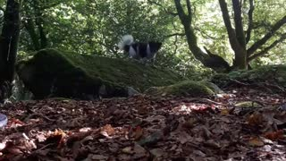Dogy Training In OutDoors - Video