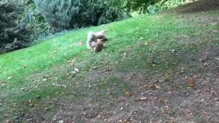 Dogs running after one another