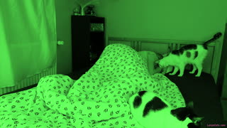 Sleeping With Cats Is Quite The Adventure!