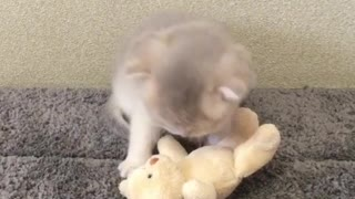 Adorable kitten plays with teddy bear best friend