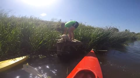 Heroic Kayakers Save Sheep From Drowning In River Avon