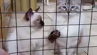 Playing with Cat outside the Cage