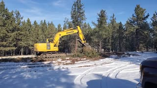 Clearing trees for our house