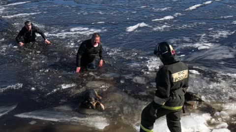 Dogs Rescued From Icy Water