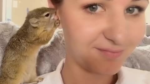 Squirrel loves to groom her owner