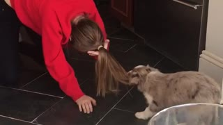 Grey puppy dog pulls on woman's hair in red sweater