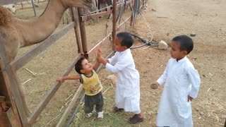 Small childerns playing and talking with animals in dubai desert uae