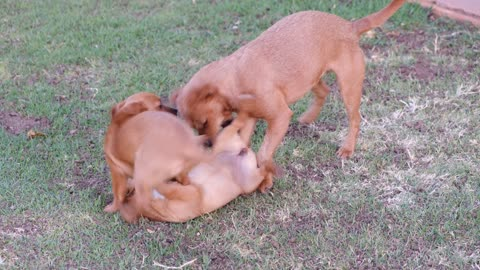 Doggy playtime