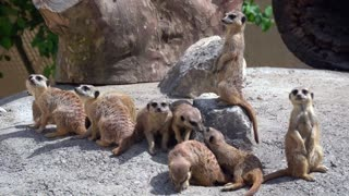 World Peoples Funny Cute Animals Earth Peoples - Video