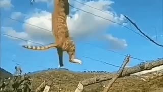 cat acrobat makes you happy